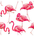tropical bird flamingo vector image vector image