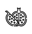 pomegranate icon vector image vector image