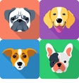 set dog icon flat design vector image vector image