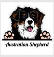 color dog head australian shepherd breed on white
