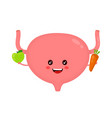 strong healthy happy bladder with apple vector image vector image
