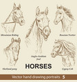 set hand drawing horses 5 vector image vector image