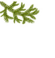 symbol of the new year a green lush branch of vector image vector image