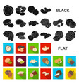 different kinds of nuts flat icons in set vector image vector image