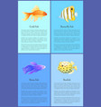 gold betta and bbutterfly boxfish fish color vector image