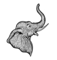 Head of elephant in profile line art boho design vector image