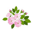 branch of blossoming dogrose flowers and buds of vector image vector image