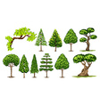 Different kinds of trees vector image vector image