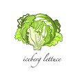 iceberg lettuce fresh culinary plant green vector image
