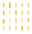Set of simple wheat ears icons vector image