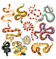 set snakes collection cartoon snakes vector image vector image