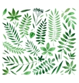 collection painted watercolors of plants and vector image