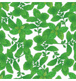 seamless pattern with green basil 4 vector image vector image