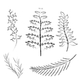 Various branches drawn in pencil and charcoal vector image vector image