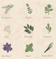 collection of herbs for you design vector image vector image