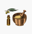 bowl spa powder olives and a bottle oil vector image