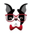 cute bulldog isolated icon vector image vector image
