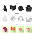 isolated object of body and human sign set of vector image