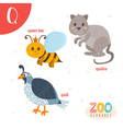 Letter Q Cute animals Funny cartoon animals in vector image vector image