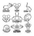 logo templates with pictures of african elephant vector image vector image
