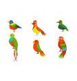 tropical birds collection beautiful birdies vector image vector image