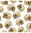 Seamless background with skulls vector image