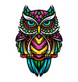 colorful owl zentangle art vector image