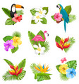 set composition with tropical flowers exotic bird vector image