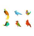 tropical birds collection beautiful birdies of vector image vector image