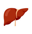 human liver icon flat style vector image vector image