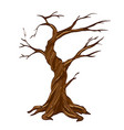 dry tree isolated on white vector image