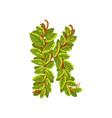 letter k english alphabet made of tree branches vector image