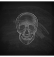 a chalk human skull on a blackboard background vector image