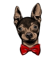 Hand Drawn Fashion with the bow tie vector image vector image