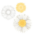 isolated chamomile daisy flowers white yellow set vector image vector image