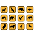 Animal icons set vector image vector image