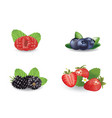 berries set vector image