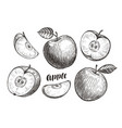 hand-drawn apples and slices sketch fruit vector image