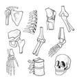human bones and joints sketch vector image