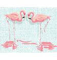 Pink Flamingo birds vector image