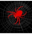 Spider on cobweb vector image