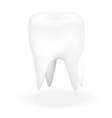 Tooth vector image