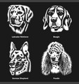 dog heads different breeds graphic vector image