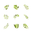 Herbs and spices icons cartoon vector image vector image