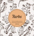 Seamless Herb Background vector image