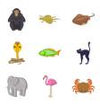 beautiful animal icons set cartoon style vector image