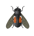 Horsefly vector image vector image