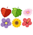 large set nature with flowers and leaves on vector image vector image