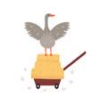 a farm goose farm animal vector image