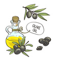 Bottle with olive oil isolated objects Hand drawn vector image vector image